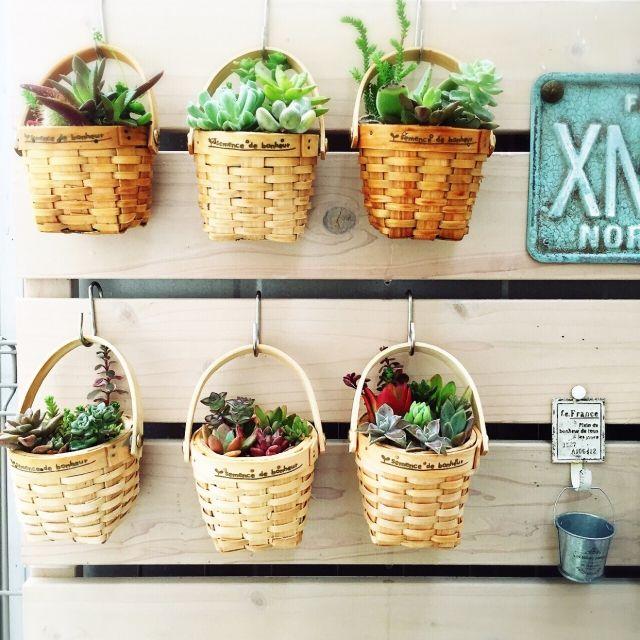 MAKIさんの、玄関/入り口,多肉植物,セリア,コンテスト参加中,コンテスト用に再投稿,ブログ更新しました♡,のお部屋写真