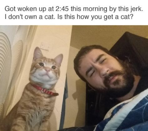 I wish that was how you got cats.