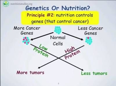 "*Animal Protein ""Turns On"" Cancer Genes - DrCarney.com - Linda Carney MD"
