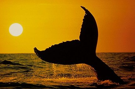 Whale tail pic
