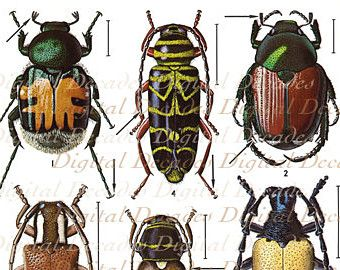 Beetles Bug Insects Oddities  Digital Image  by DigitaIDecades