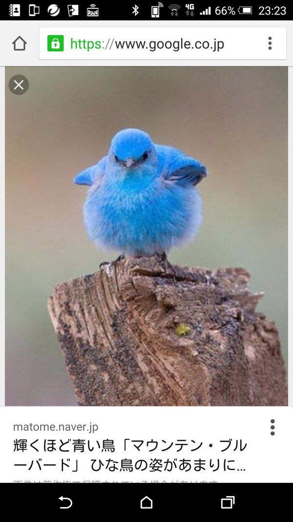 Twitter 秘密にしておきたかった生き物 | 秘密にしておきたかった生き物 ...