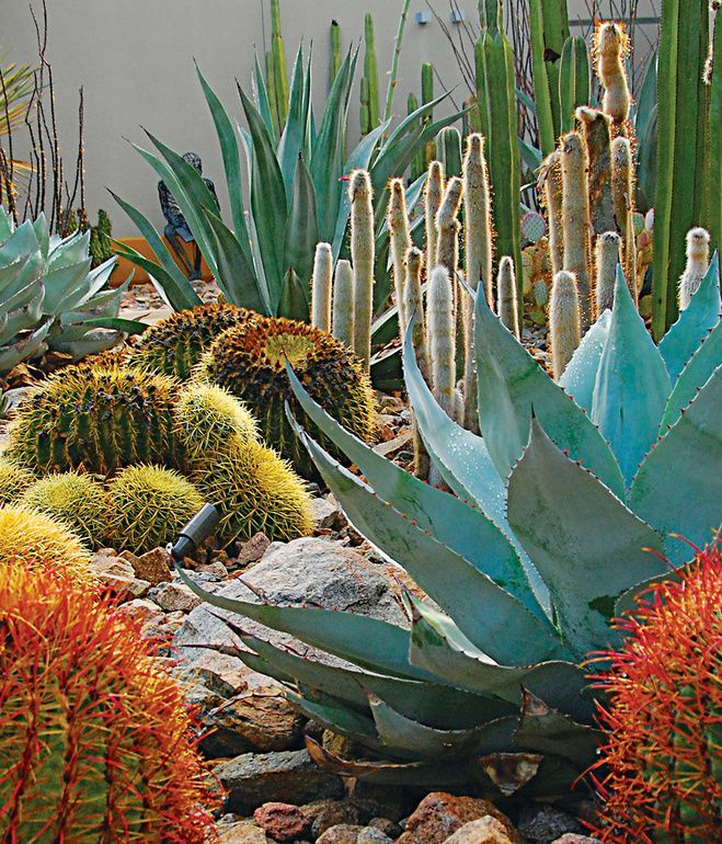Desert Garden Ideas: Best 25+ Outdoor Cactus Garden Ideas On Pinterest