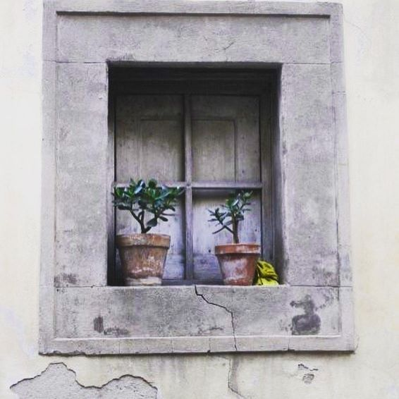 The cutest window on my trip to Cortona, Italia  #windows #visititaly #cortona #heritagebuilding #beautiful #melbournelifelovetravel #potplants #italia #picturesque #tuscany #toscana #underthetuscansun