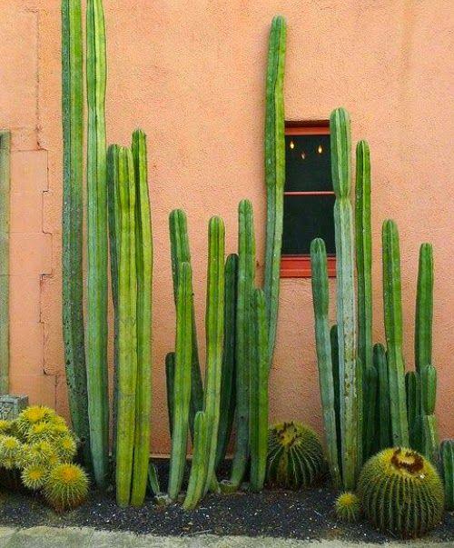 Mrs Boho: I ♥ cactus (Part II)