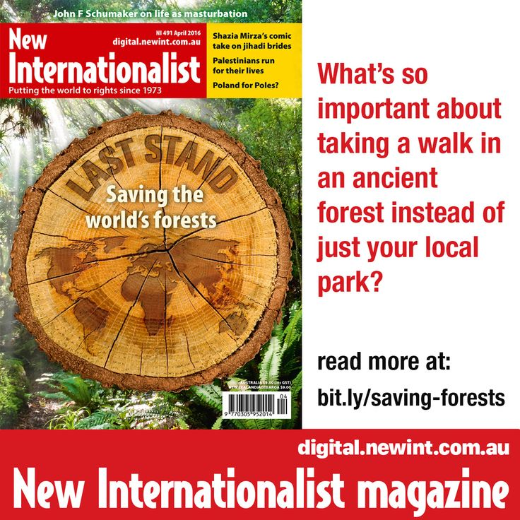 What's so important about taking a walk in an ancient forest instead of just your local park? Find out at bit.ly/saving-forests
