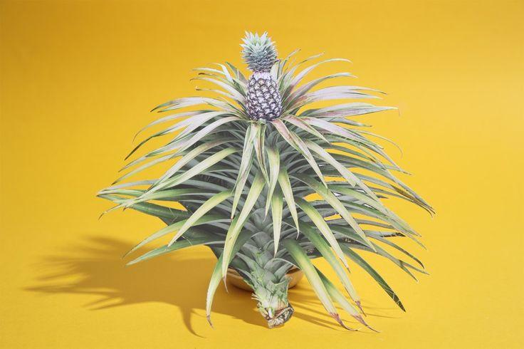Komkommertijd - Marin Leus  fotografie, groente, stilleven, fruit, kunst, stilllife, still life, gezond, duurzaam, voedselverspilling, kabk, photography, food still life, moestuin, ananas, pineapple