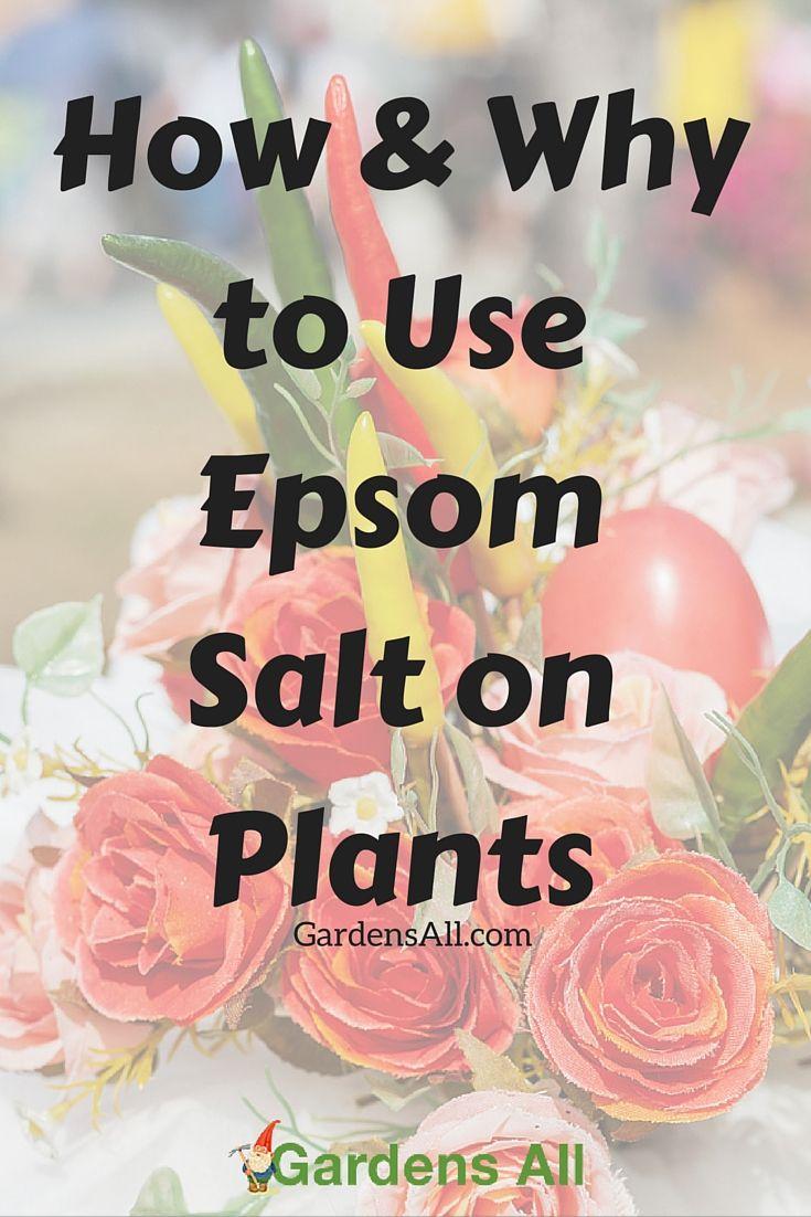Epsom salt uses are extensive… including in the garden!  Garden Hacks | Gardening | Plants