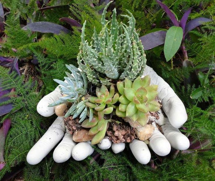 un porte-jardinière DIY en béton et gants de latex avec arrangement de plantes succulentes