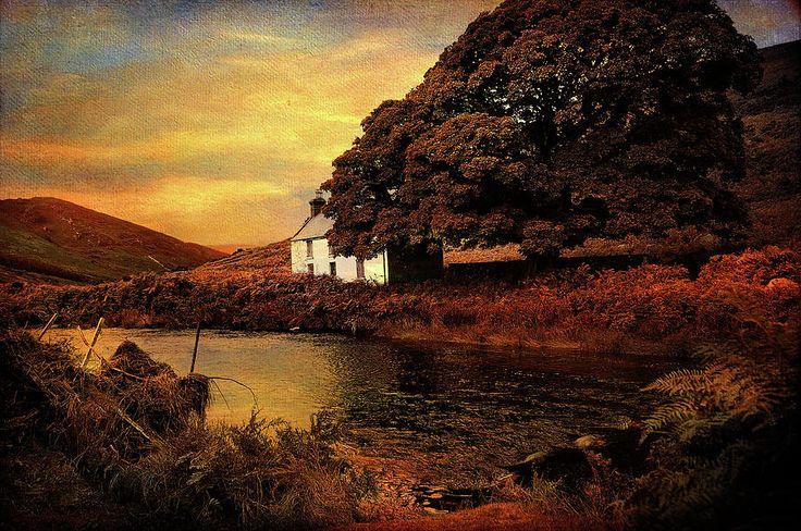Golden Sunset At Lake.  Rural Ireland by Jenny Rainbow