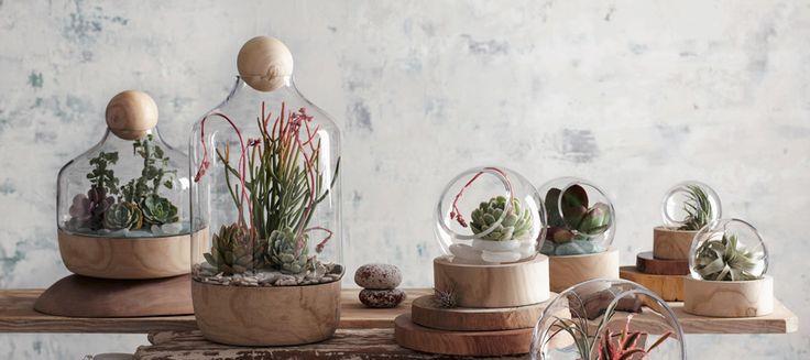 テラリウム −2−植物をオシャレに見せるガラスの中の小さなガーデン
