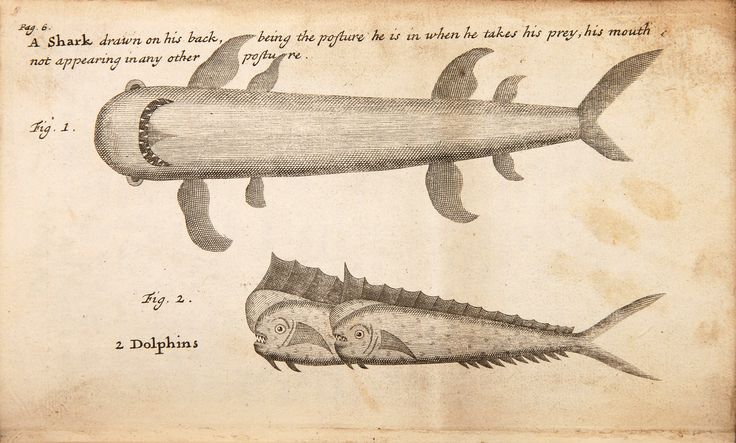 William Funnell | A Voyage Round the World | Shark and dolphins (1707)