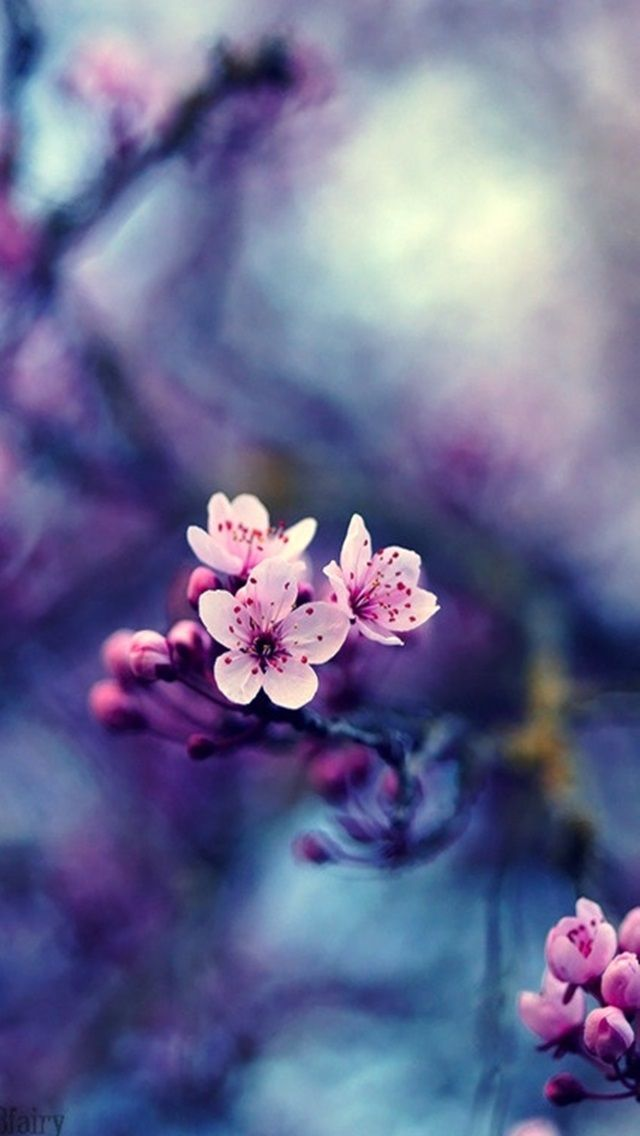 Flowers - #spring #flowers iPhone wallpaper @mobile9