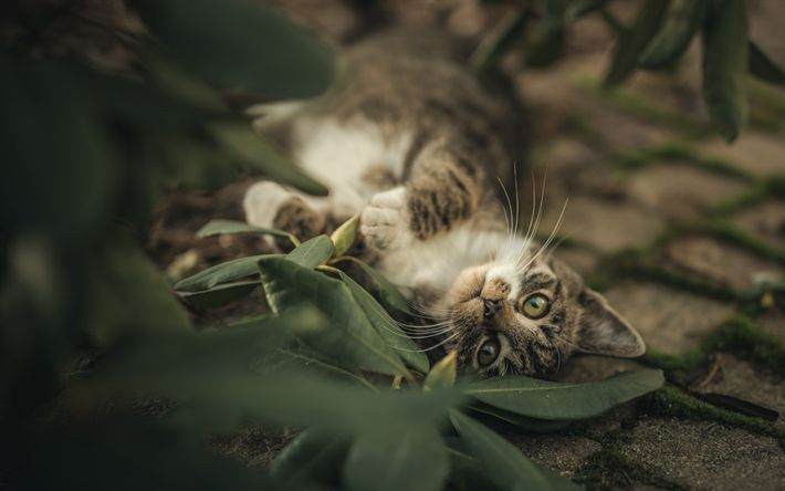 Download wallpapers gray cat, pets, forest, cute animals, cats