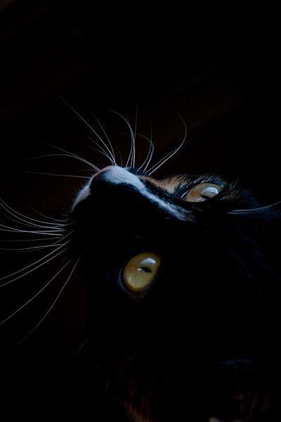 Black cat on the black