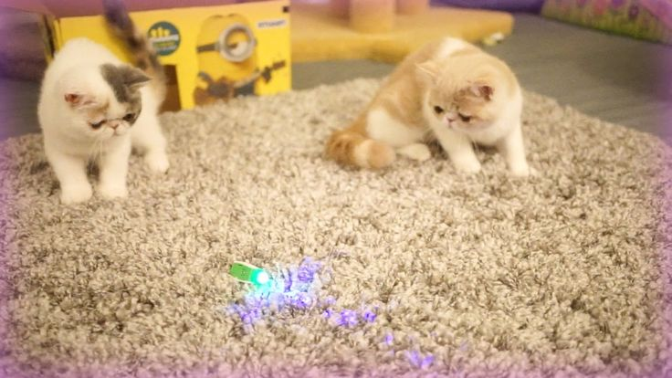 As dedicated cat parents, we often pick up a couple new toys along with food & o…