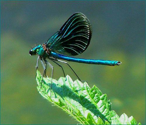 Beautiful flying bug in the garden... | beautiful beasties ...