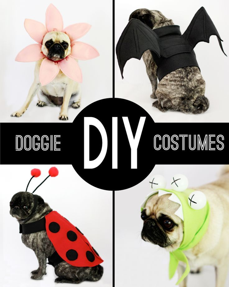 round-up: DIY Dog Costumes    small friendly http://www.turmericfordogs.com/blog