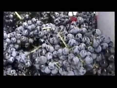 La via del vino Aglianico Maschito Potenza Basilicata