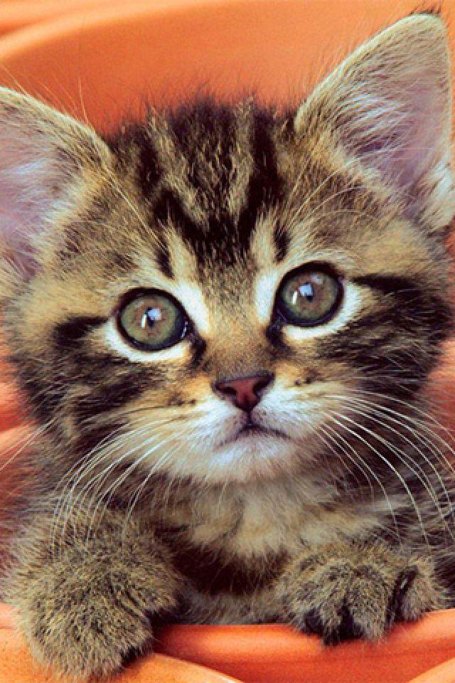 This is my dream cat