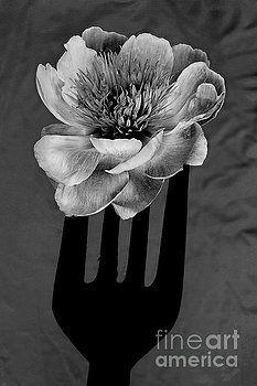 Alexander Vinogradov - FLOWER for FOODIE #1 in black and white.