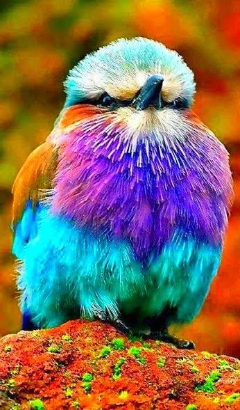 84 best birds on flowery branches images on pinterest