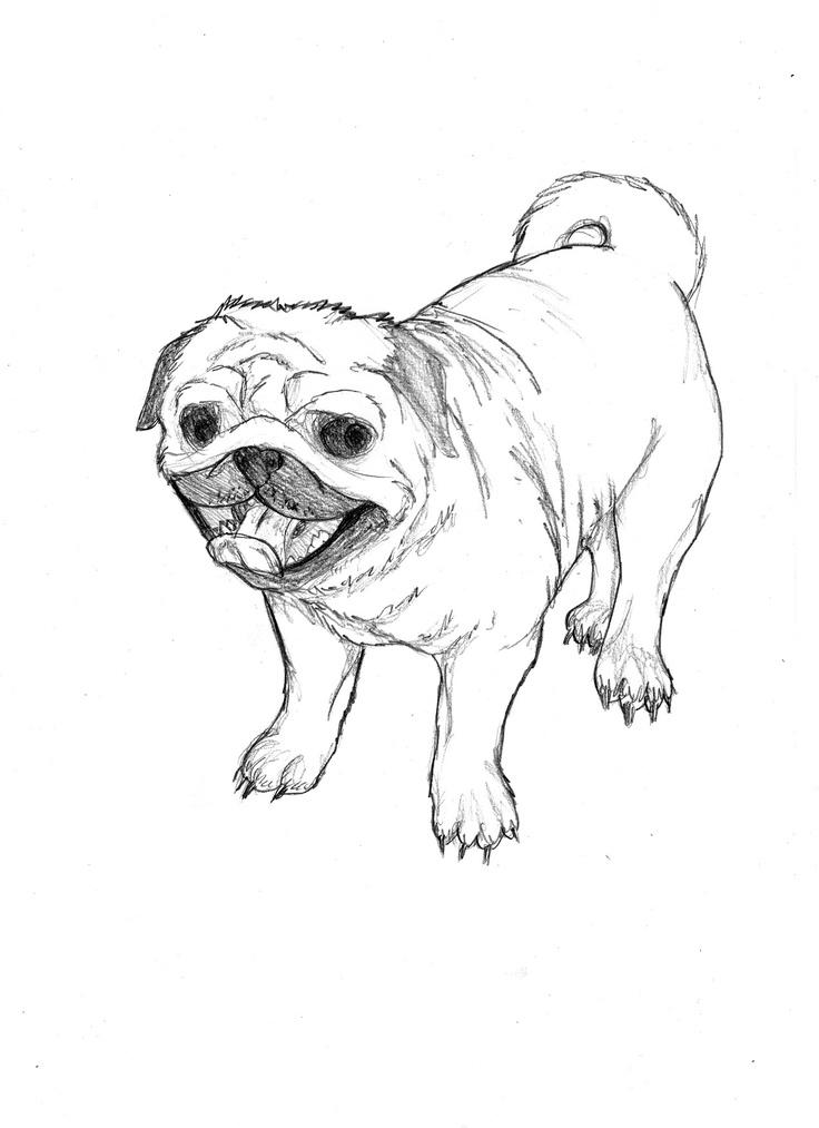 25 mejores imágenes de Pugs! en Pinterest   Arte pug, Cosas ...