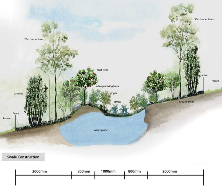 Linear permaculture, swale meets heugelkulture (sp?) Yes, yes, yes!