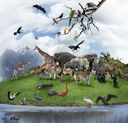 The Amazing Image of Wildlife Collage from 123RF. Repin this if you can spot your favourite animals inside!