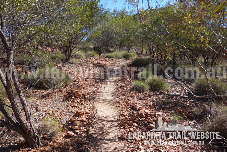 Pleasant and easy walking along the foothills of Mount Sonder. © Explorers Australia Pty Ltd 2014