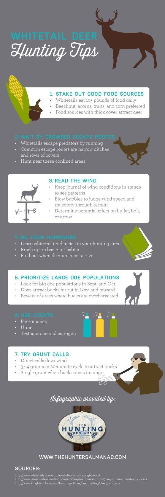 Whitetail Deer Hunting Tips - Cool Infographic with Hunting Tips for Deer | Hunting Tips and Gear, Survival Prepping Skills at survivallife.com