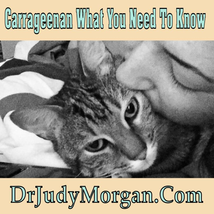 Carrageenan In Canned Cat Food Harmful