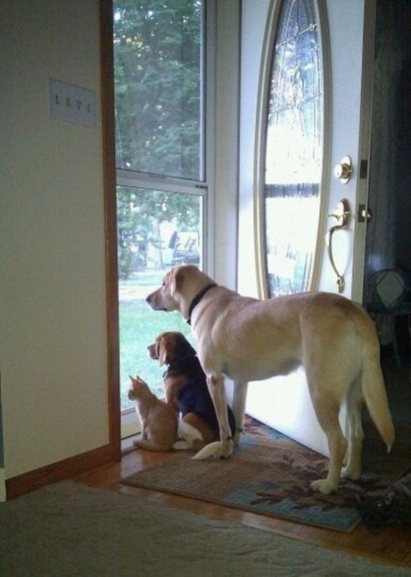 pets waiting: Dogs Quotes, The Doors, Cat, Puppies, Friends, Front Doors, Coming Home, Pet Quotes, Animal