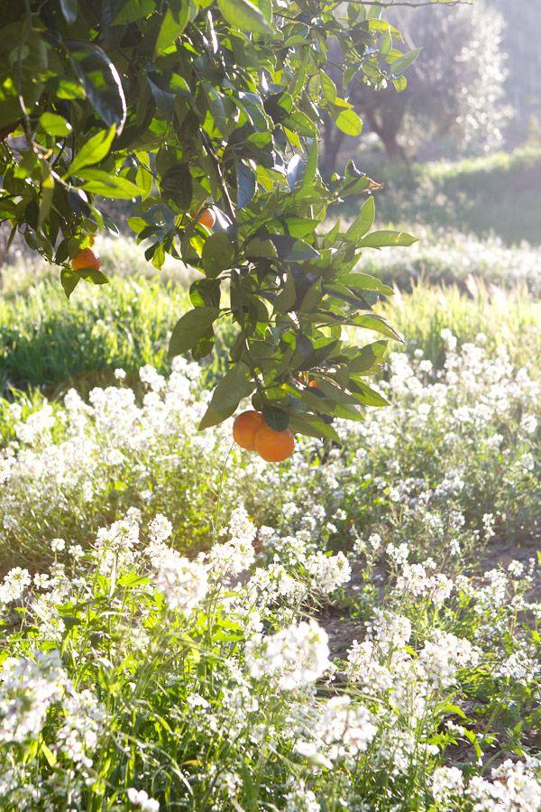 Image Via: La Tartine Gourmande: Beautiful Yard, Fruit Salad, Orchards ...
