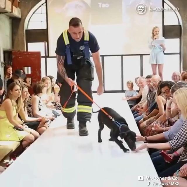 lavozdelmuronet@mrbonesandco ha tenido una idea fantástica para fomentar la adopción de perros sin hogar lavozdelmuronet#adopcion #perros #perro #mascotas #desfile #adoptar #rescate #animales #ideas #iniciativa #adoption #dog #dogs #pets #adopt #rescue #animals #initiative #videooftheday #videogram #videoshoot #instagood #instamoment #instavideo #video #bestoftheday #instadaily #instacool #lavozdelmuro