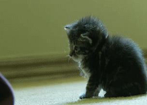 How To Turn Off Kitten [GIF]
