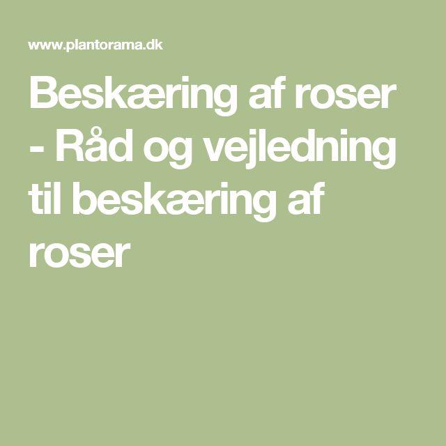 Beskæring af roser - Råd og vejledning til beskæring af roser