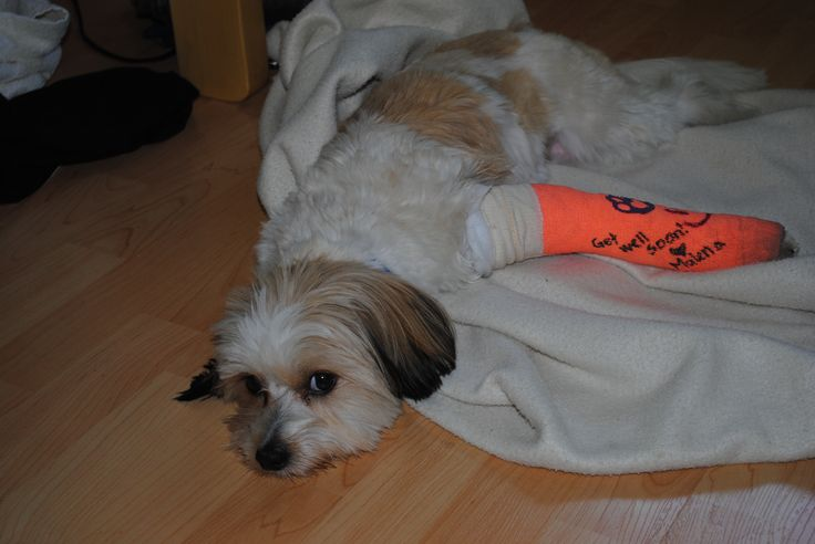 My baby after he broke his leg!! :(