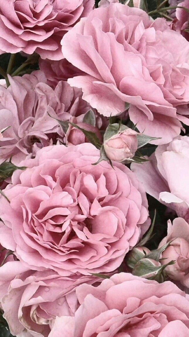 Flowers Ot Maria Kapadia Cvetochnye Fony Rozovye Piony Cvety