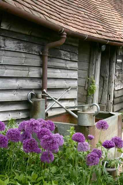 pretty purple flowers and watering cans