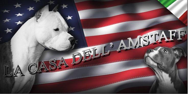 "Allevamento,American Staffordshire Terrier ""Amstaff"""