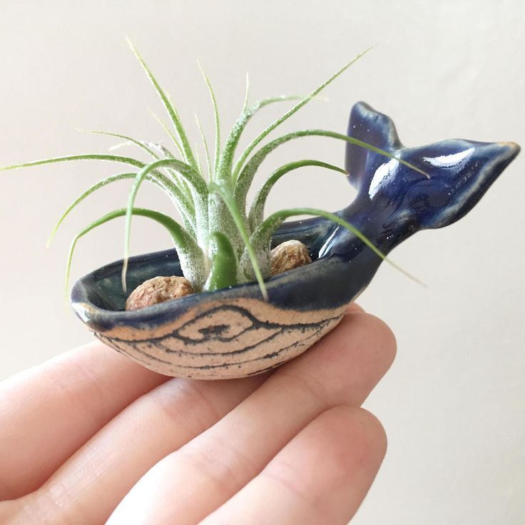 http://sosuperawesome.com/post/161840750549/whale-air-planter-or-jewelry-holder-by-tessalation