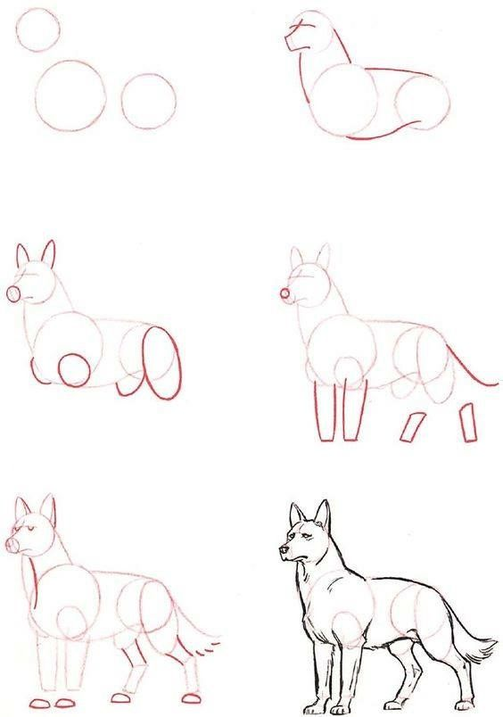 Волк рисунок карандашом картинки поэтапно