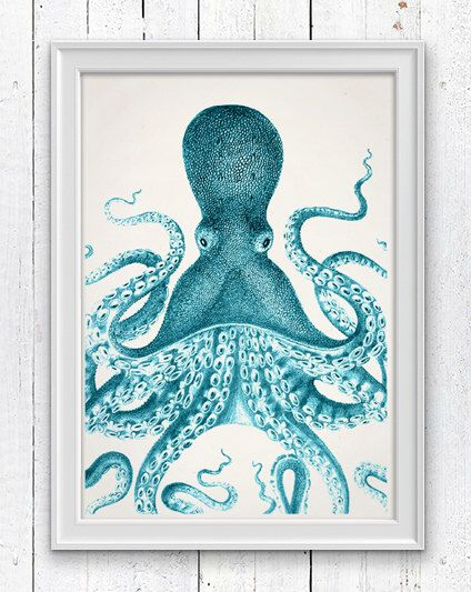 best 25+ octopus pictures ideas on pinterest | octopus photography