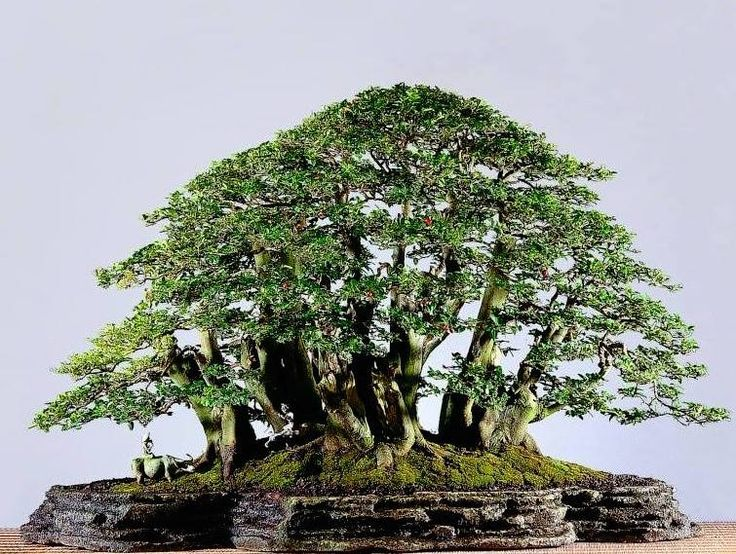 Stunning landscape / forest Bonsai, by Bonsai Sekinchan. #bonsai