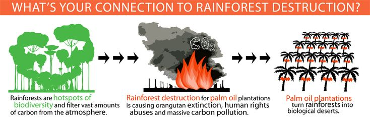 Palm Oil is the reason millions of acres of rainforest have been destroyed. Read the Palm Oil Fact Sheet, and read labels. Don't buy products made with non organic palm oil. http://ran.org/sites/default/files/po_factsheet.pdf