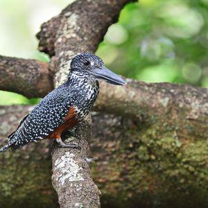 Ichingo Chobe River Lodge | Birding