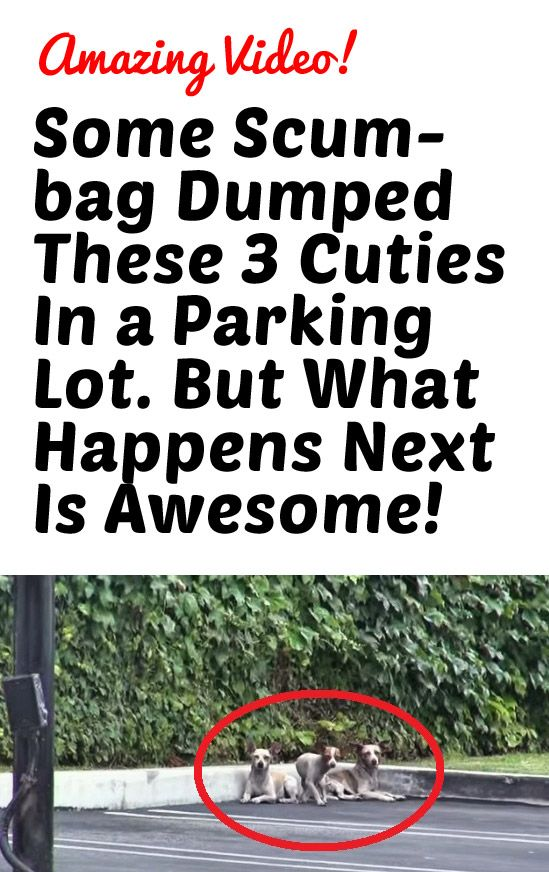 Some Scumbag Dumped These 3 Cuties In a Parking Lot. But What Happens Next Is Awesome!