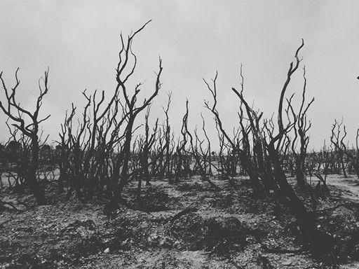 Dead forest or hutan mati