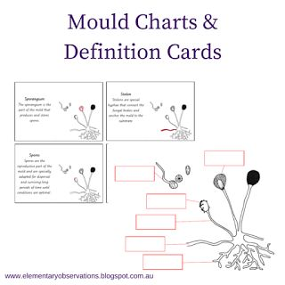 Exploring Fungi - free mould printable (also includes a set with US spelling mold)